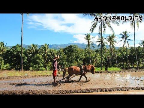 유튜브 교육 세계테마기행 적도의 섬, 술라웨시 1~4부