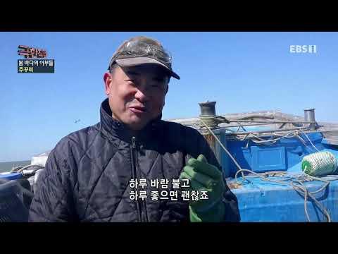 유튜브 EBS 방송 극한직업 – Extreme JOB_봄 바다의 어부들